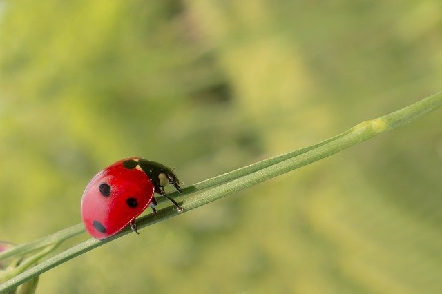 Pest Control Tips That Can Work For Anyone