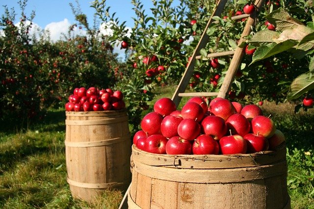 Everything You Need To Know About Organic Gardening