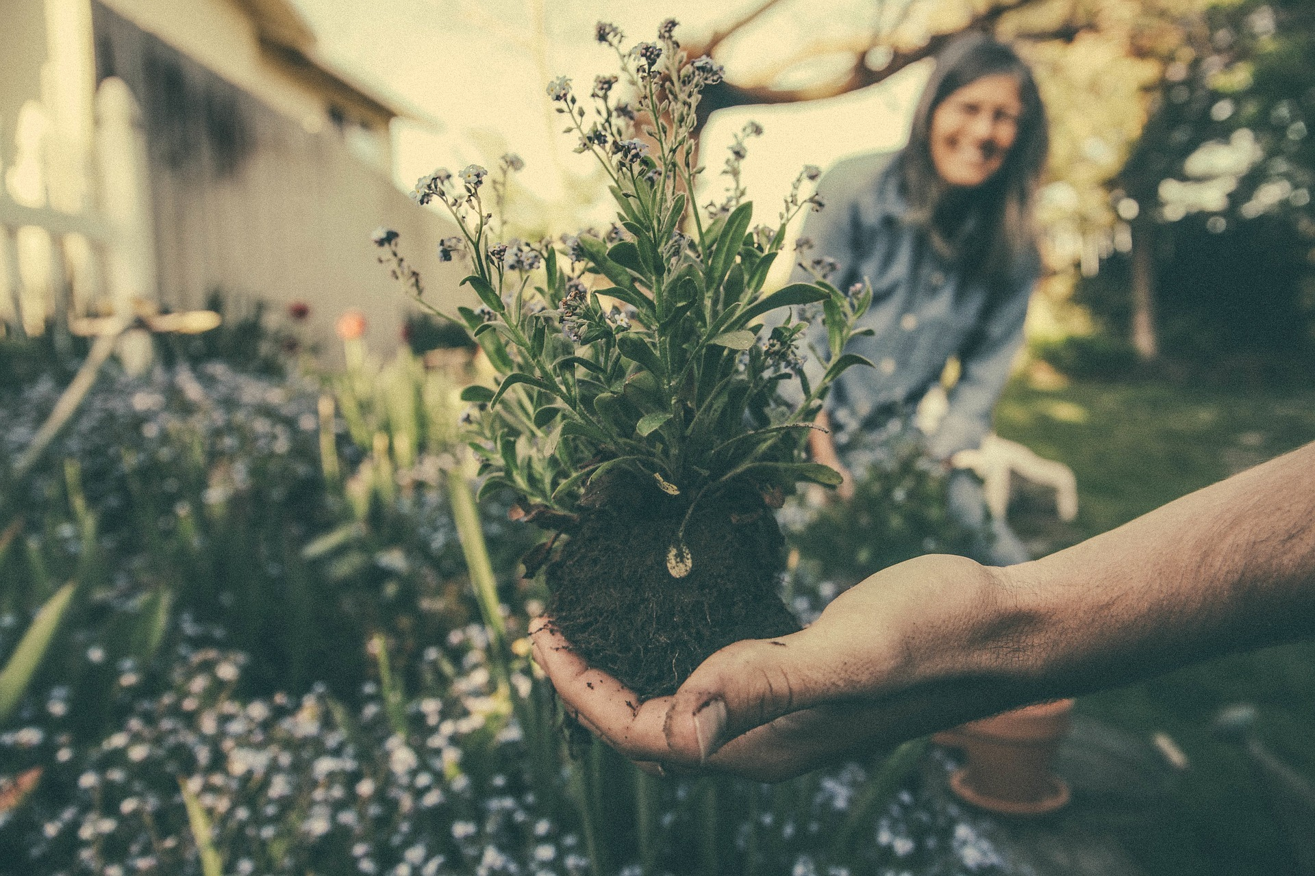 Beginner's Guide On How To Start Flower Gardening In Your Home